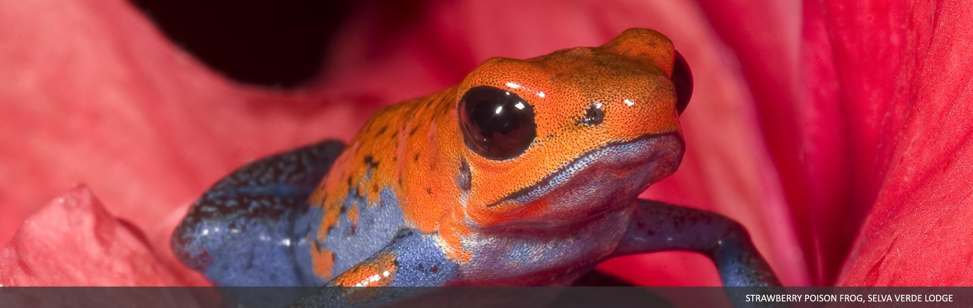 Amphibians-Reptiles-00.jpg