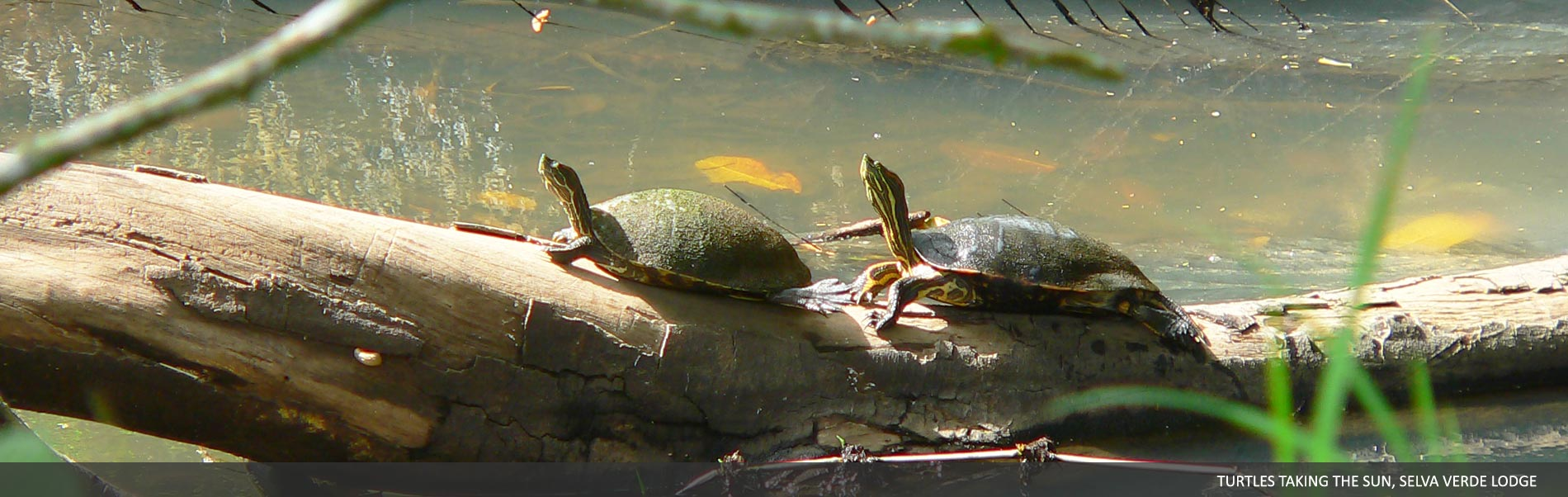 Amphibians-Reptiles-02.jpg