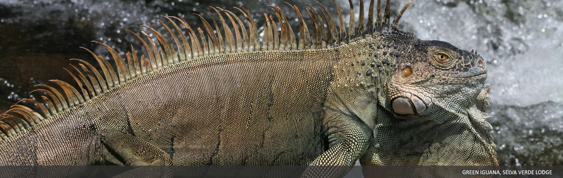 Amphibians-Reptiles-04.jpg
