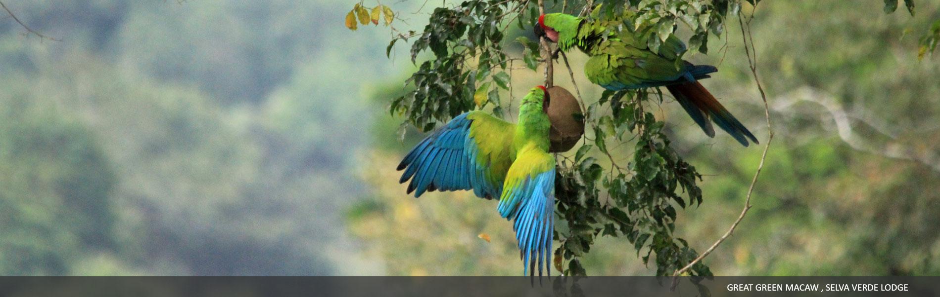 explore-selvaverde-07.jpg