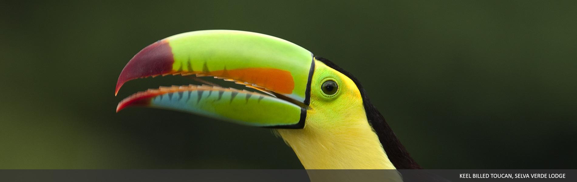 selvaverde-costarica-00.jpg