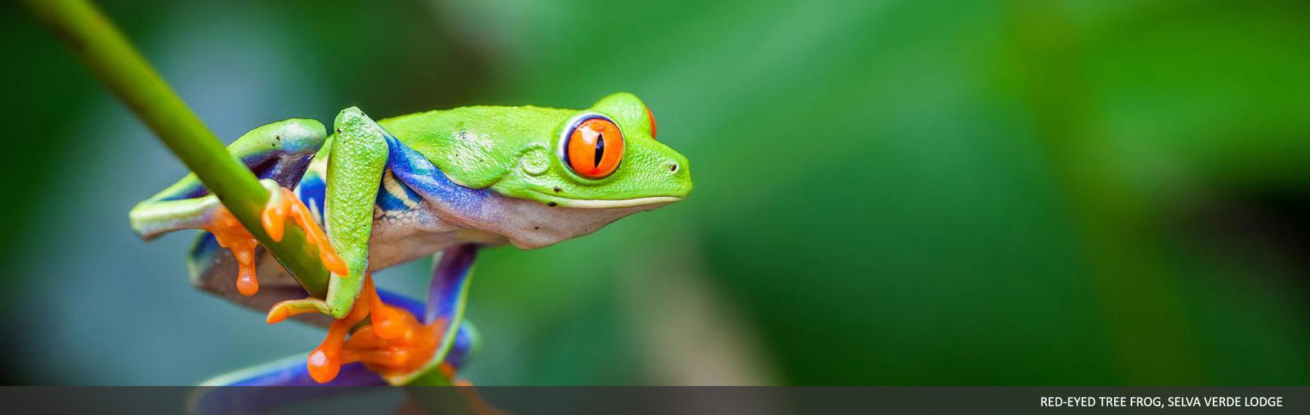 selvaverde-costarica-01.jpg