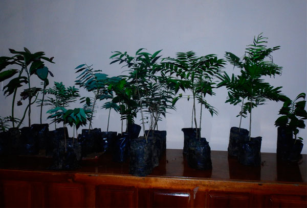 Reforestation 3