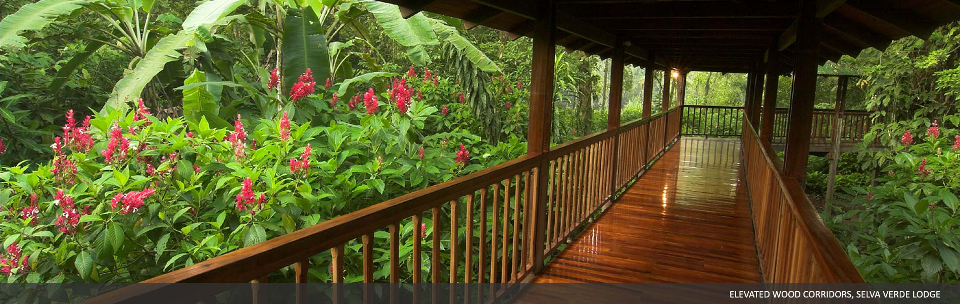 activities-selva-verde-01.jpg