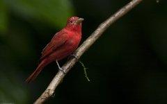bird_selva_verde_001.jpg