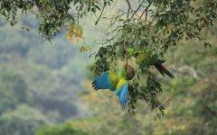 bird_selva_verde_009.jpg
