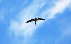 bird_selva_verde_010.jpg