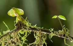 insects_selva_verde_006.jpg