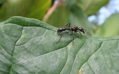 insects_selva_verde_008.jpg