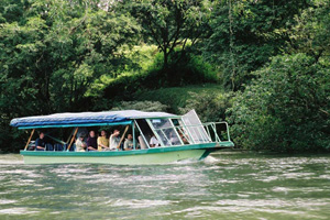 selvaverde small 23